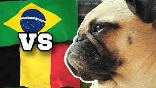 BRASILIEN gegen BELGIEN 🇧🇷⚽️🇧🇪 FUSSBALL ORAKEL FRIEDA » Viertelfinale WM 2018 Highlight BRA BEL