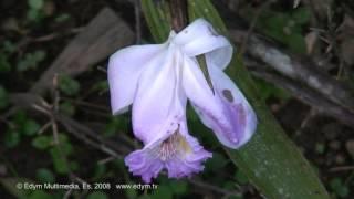 Orquideas y heliconias