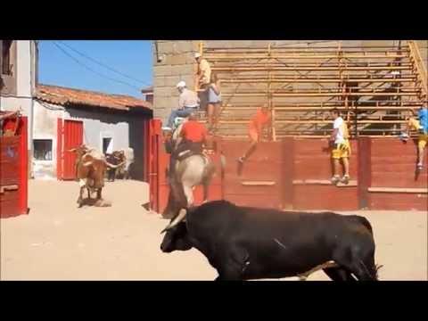 Cogida toro del aguardiente Fuenteguinaldo 2014