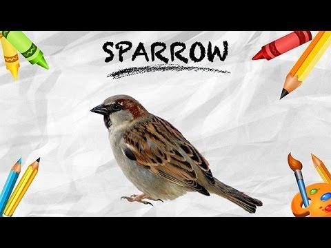Essay on parrot for kids