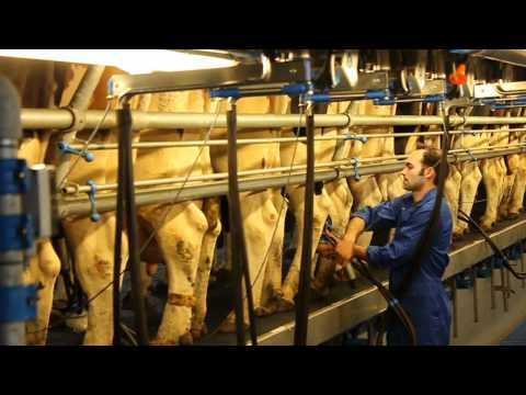 Dairymaster 26 stands Swing-Over rapid exit