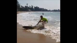 Man Attempts to Pull Beached Shark Back to Sea