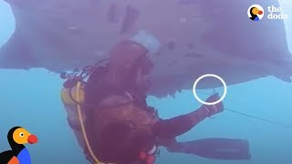 GIANT Manta Ray Rescued By Scuba Divers | The Dodo