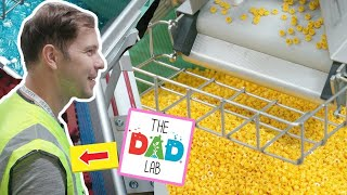 LEGO Factory Tour in Billund Denmark with TheDadLab ! Inside the story of how LEGO is made
