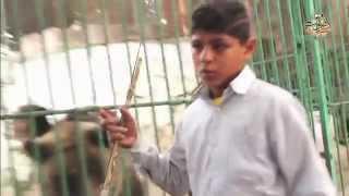 أطفال يحرسون أقفاص الحيوانات المفترسة بحديقة حيوان الإسكندرية