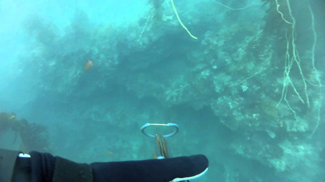 Reef Points Reef Point Spearfishing Oct