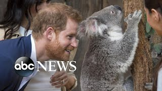 Harry, Meghan celebrate baby news in Australia