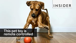 This remote control ball lets you play with your pet from anywhere