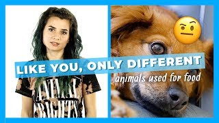 Like You, Only Different: Animals Used For Food