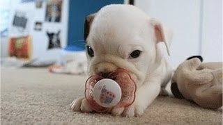 """Puppies With Pacifiers"" 
