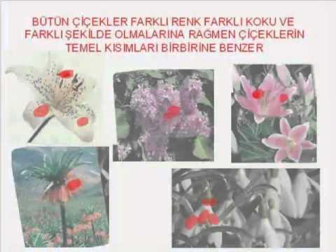 Canlılar dünyasını gezelim ve tanıyalım çiçekli bitkiler