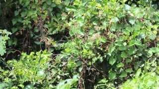 #5404, Plantas selvaticas con mariposas revoloteando por el lugar [Raw], Flora y fauna