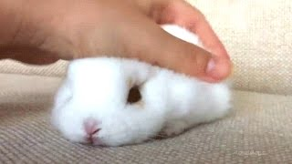 Rabbit - A Funny And Cute Bunny Videos Compilation || NEW HD