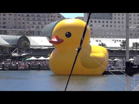 Rubber Duck arrives at Darling Harbour for Sydney Festival 5 January 2013