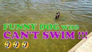 Funny dog  can't swim with Old Macdonald had a farm music for childrens