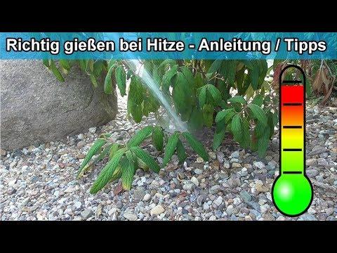 Den Garten & Pflanzen im Sommer bei Hitze richtig gießen - Hitzewelle Tipps Blumen wie oft wässern