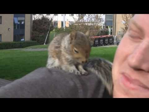 Tame squirrel on my shoulder