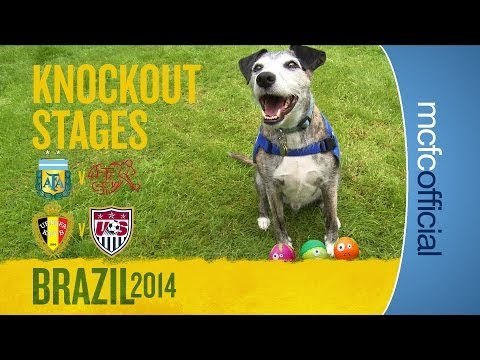 DOUGIE THE DOG PREDICTS | Argentina & Belgium World Cup Predictions