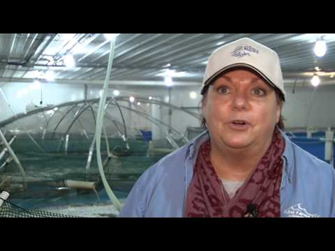RDM Aquaculture - Fowler, IN
