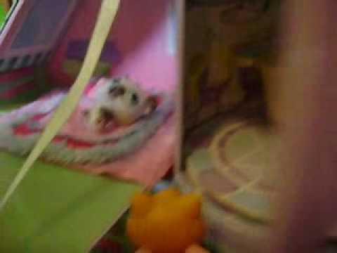 Littlest Petshop A Kindergarden Story:part 3 video