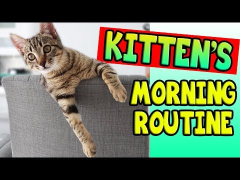 KITTEN'S MORNING ROUTINE!