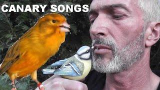 KANÁRI - The best Hungaryan canary song and video