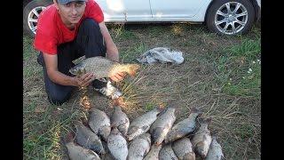 прикормка из макухи для рыбалки