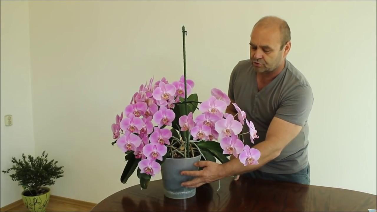 все как в магазине выбрать орхидею при покупке далеко