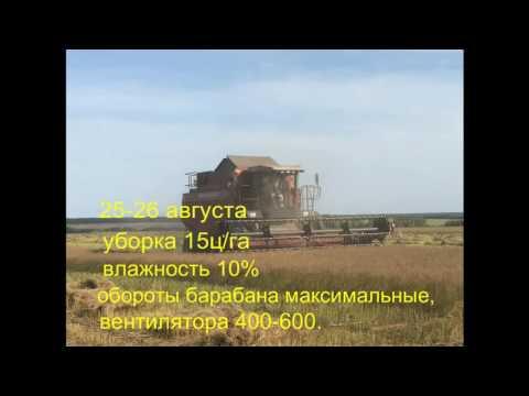 Ютуб выращивание и уборка масличного льна 22