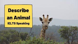IELTS Speaking Advice - Describe an Animal