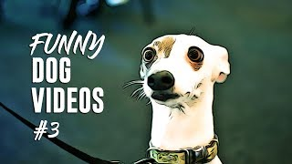 Funny Dog Instagram Videos Compilation 2019 (Part 4)