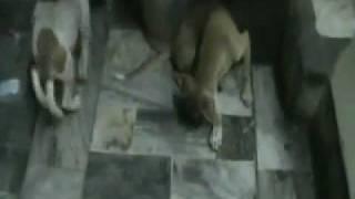 Dogs eating dhokala !!!!!!