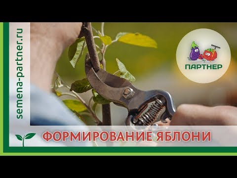 Как правильно формировать крону молодых деревьев, (например яблонь)
