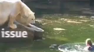 Women attakced by a polar bear in the zoo