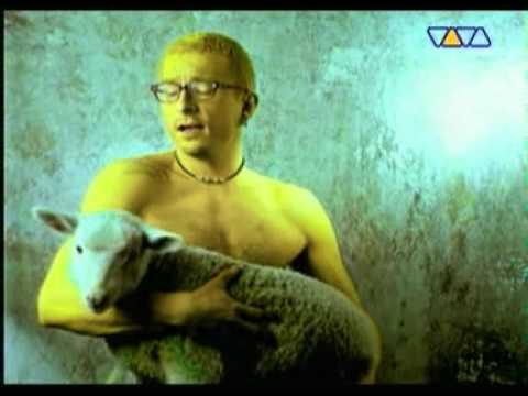 Blenders - Owca
