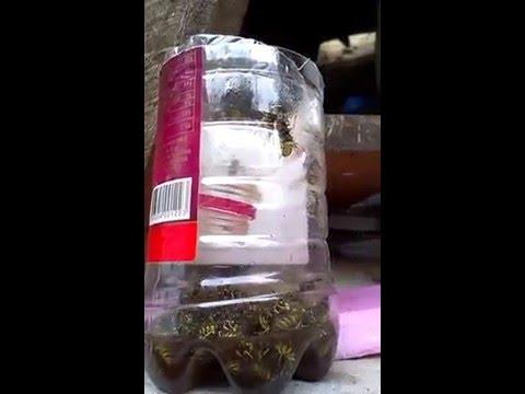 sarca arı pet şişe