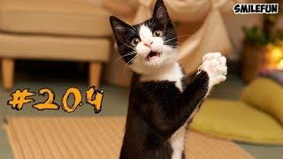 Смешные коты и котики, приколы про котов до слез Смешные кошки Funny Cats 2018