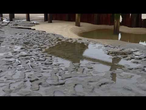 800000 Year Old Footprints Found in England