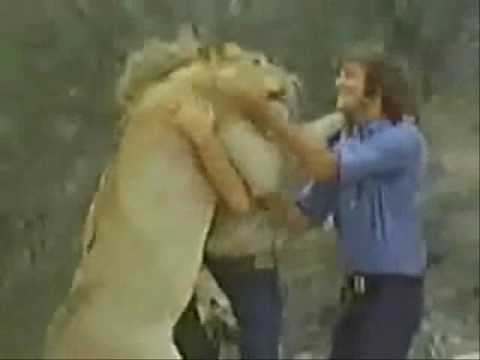 True Love between lion and men