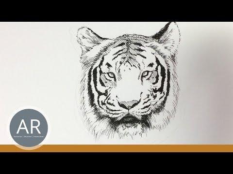 Tier-Illustrationen. Tiere zeichnen lernen. Tiger zeichnen. Mappenkurs Kunst.