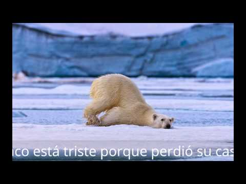 Global Warming effect on Polar bears(spanish project)