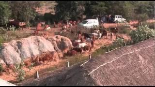 VISIT TO Govindan Goshala Madurantakam Tamil Nadu India