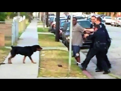 Dog Shot and Killed by Police (Warning: Graphic Video) | The Rubin Report