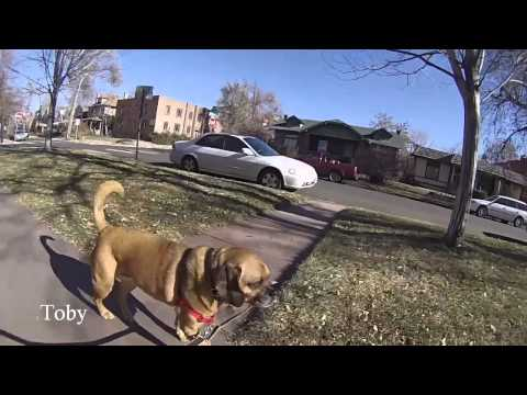 Day In The Life - Denver Dog Walkers