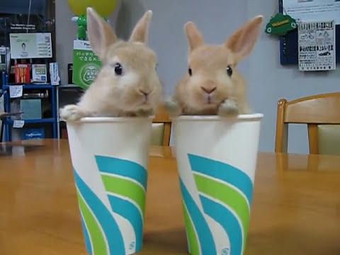Thumb Mega Cute: Twin rabbits in cups