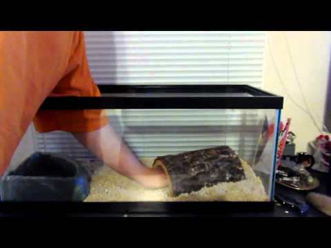 How to Setup a Ball Python Cage (Christian)