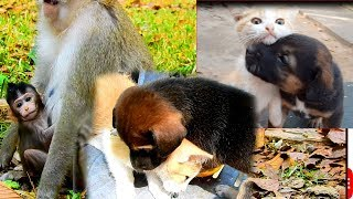 Cute, Funny, Lovely Animal Compilation Video | Love These, Dog, Cat, Baby Monkey