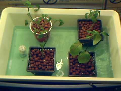 Cheap Ebb Abd Flow Homemade Hydroponics System Youtube