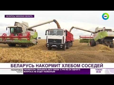 Белорусские аграрии собрали 2,5 миллиона тонн пшеницы - МИР24