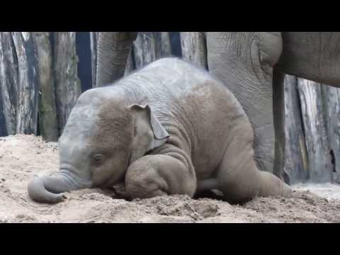 Little elephant Kyan; It's playtime!!